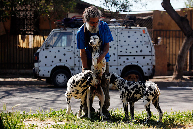 'Dalmatian Man' risks getting evicted for rescuing dogs