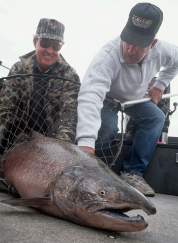 Are there any mammoth Chinook left in the Columbia?
