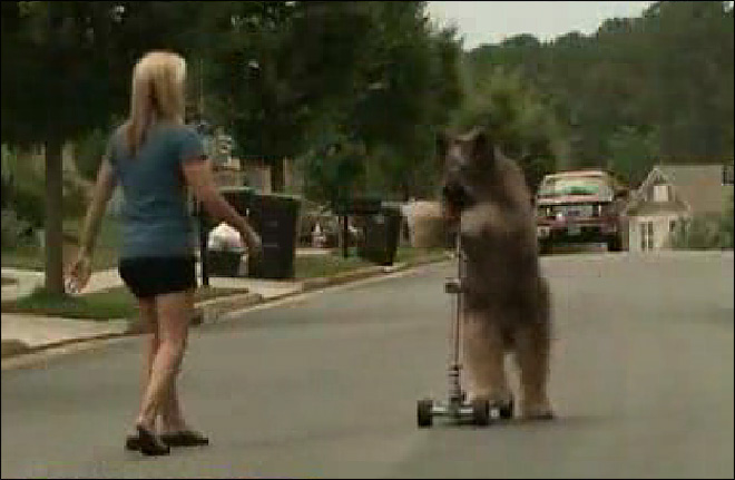 Dog scooters its way into Guinness record book