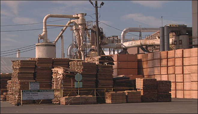 Local timber mill falls behind with shutdown-based logging ban