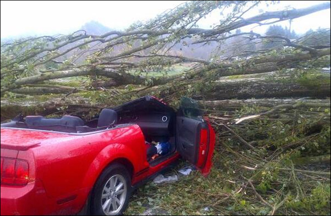 2 hurt by falling trees as wind storm slams Western Washington