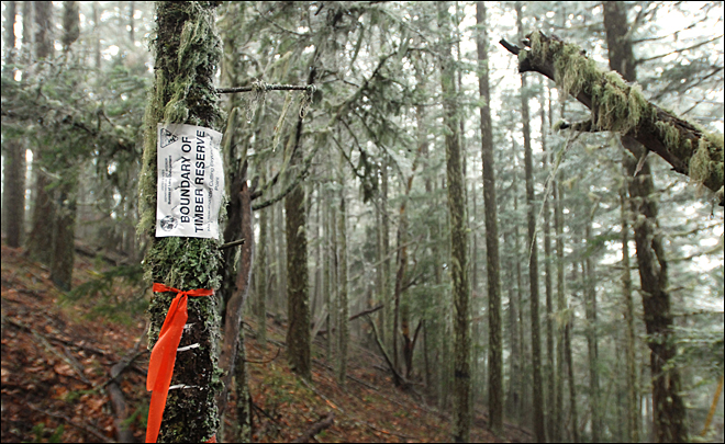 Another suit filed to halt timber sale, stop logging