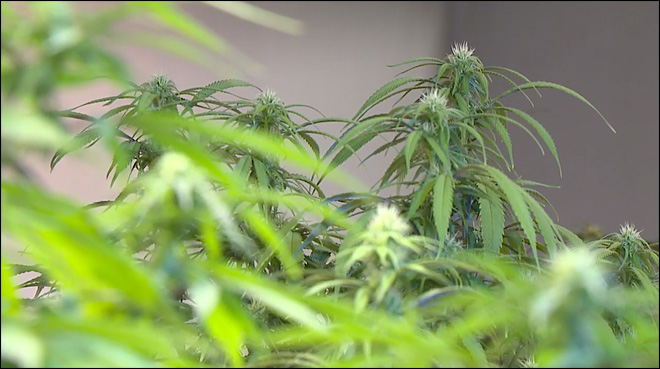 Legal pot sales begin amid uncertainty in Colo.