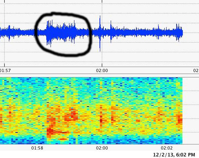 Seahawks fans register on seismometer like a small earthquake