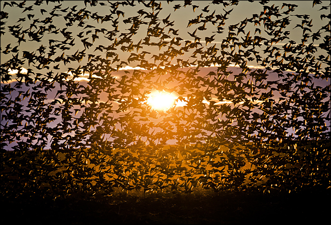 APTOPIX Romania Starlings Sunset