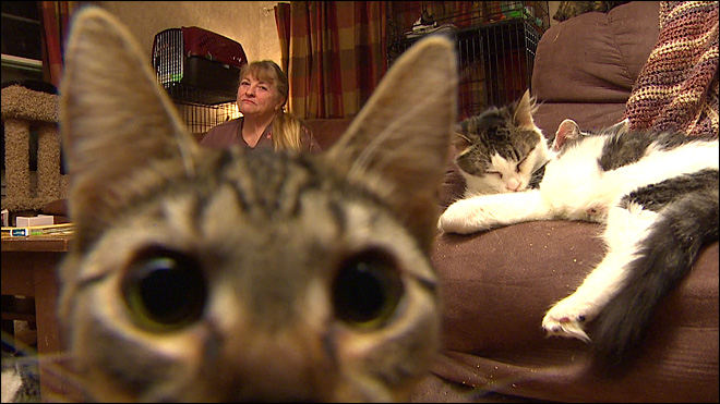 Looking to adopt a cat? Wenatchee woman has 150 to spare