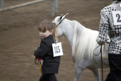 Oregon Gold Miniture Horse Show