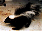 Officer suspended, refused to shoot skunk that bit child