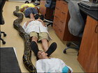 Record 18-foot python caught in Florida