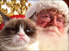 Grumpy Cat makes holiday music video with friends