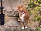 Feline Jock VI presides at Churchill's estate