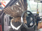 Woman avoids serious injuries after goose impales windshield