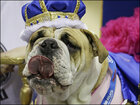 Ugliness is gorgeous at 'Beautiful Bulldog' event