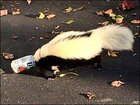 Police rescue skunk with head stuck in beer can