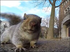 Hungry squirrel goes looking for food, snags a running camera instead