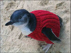 Australia's oldest man knits sweaters for oil-covered penguins