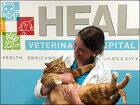 Former fat cat in Texas now half his original size