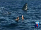 Lucky swimmers have whale of a time