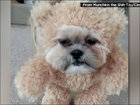 Is it a teddy bear or a dog?