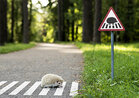 Photos: Tiny creatures get their own tiny signs in Lithuania
