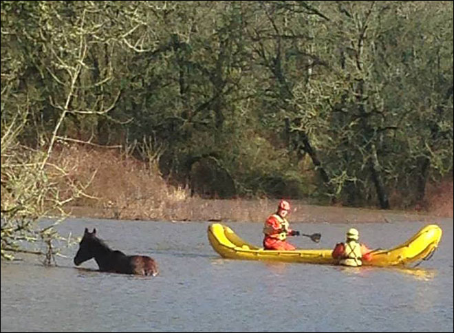 Horse rescued from flooded field after getting tangled in barbed wire