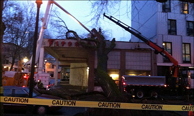 Tree falls on downtown Portland building