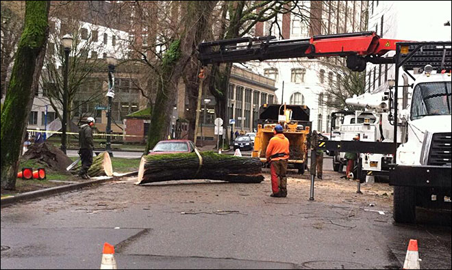 Crews remove large tree that fell on downtown Portland building