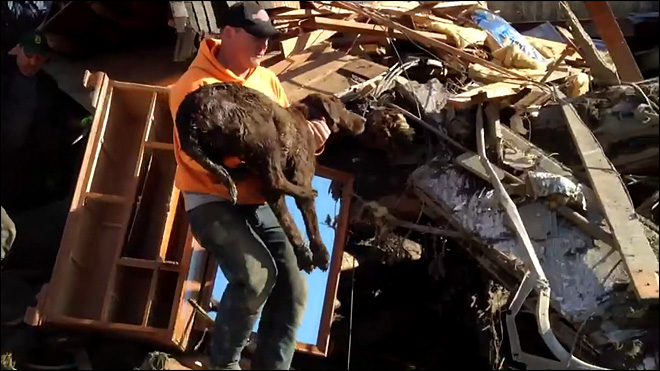 Family dog rescued from mudslide rubble