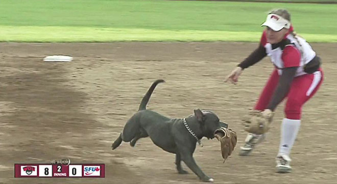 Dog snags gloves off hands of softball players