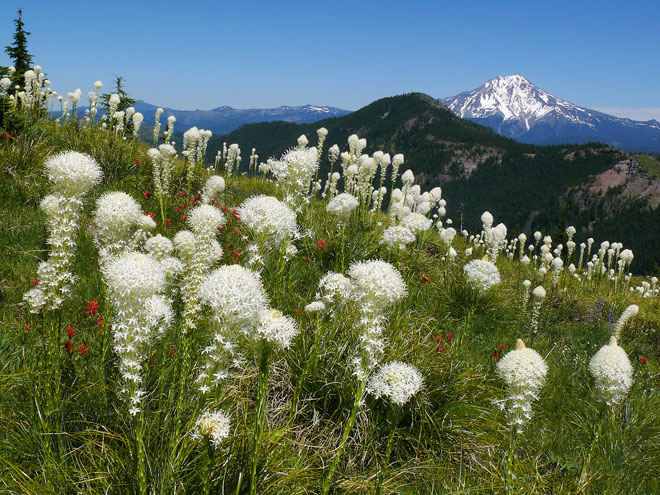 All the pretty flowers: Oregon app puts petals to the mettle