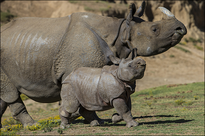 Mother's Day: Zoo babies and their moms