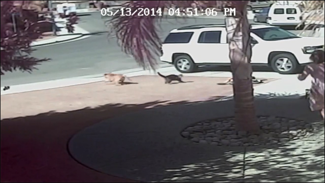 Family cat saves boy from dog attack: 'Tara is my hero'