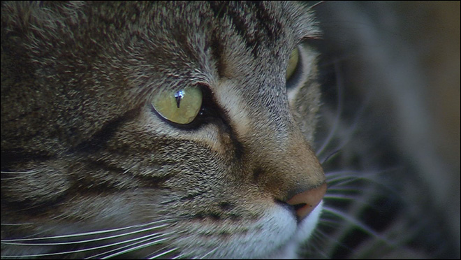 Hero cat to 'throw out' first pitch at baseball game