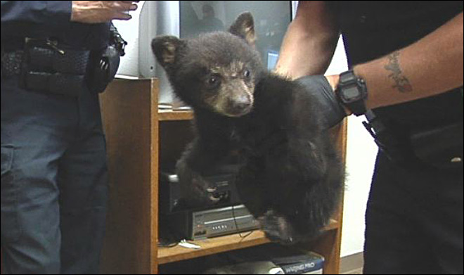 Boy finds bear cub inside city limits