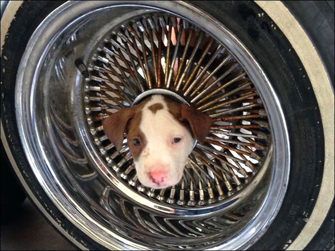 Firefighters free puppy from auto wheel