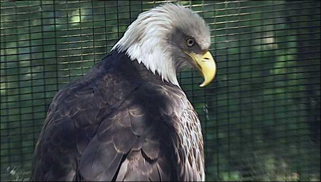 Wind farm gets govt. permit to avoid penalties from eagle deaths