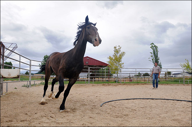 Idaho man has 100 days to train mustang for competition
