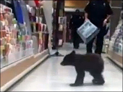 Bear cub strolls through drug store in Ashland