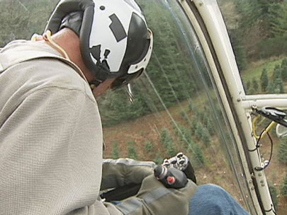 Helicopters help harvest Christmas trees