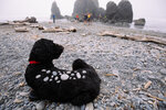 Photos: Camping on the coast (with a dog)
