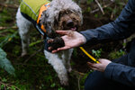 Company trains dogs to hunt truffles