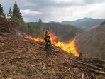 Early season Oregon wildfire contained at 206 acres
