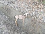 Reward offered after fawn shot and killed