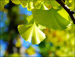 Why you can forget about Ginkgo
