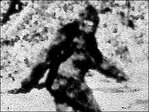 Virginia woman calls 911 to report she saw 'Bigfoot with a baby'