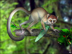 Meet your distant cousin: Tiny hyperactive primate