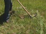 Ditch the mower, grab a scythe? 'It'd be a lot quieter on Saturday'