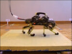 Engineers create robot that runs like a cat