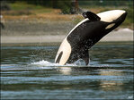 Coast Guard: 'Canoe' in Coos Bay was orca whales