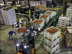 U.S. wholesale prices drop by record 0.8 percent in January